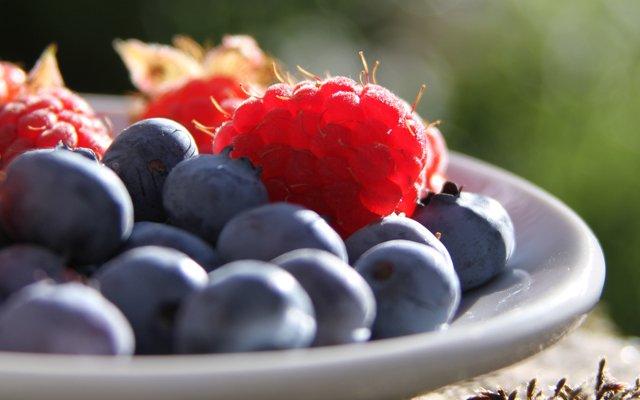 fruitvliegjes