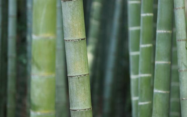Bamboe nog altijd in opmars binnen de kledingindustrie
