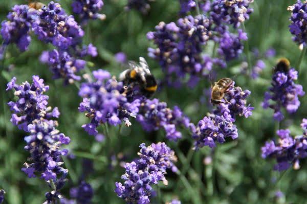Over hoe we de bijen kunnen helpen