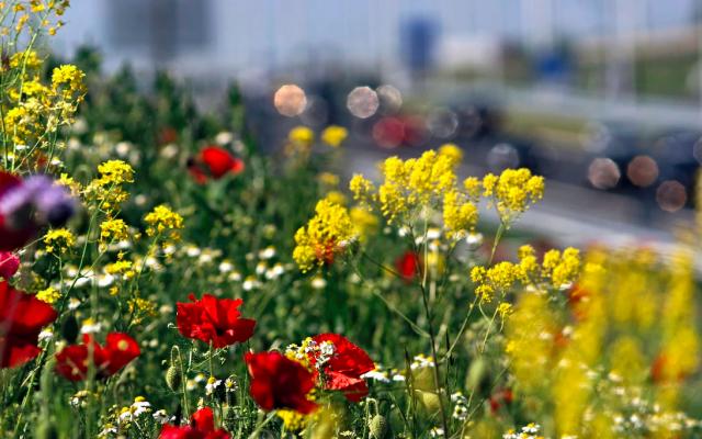 Honey Highway wil van Nederland een bijenland maken