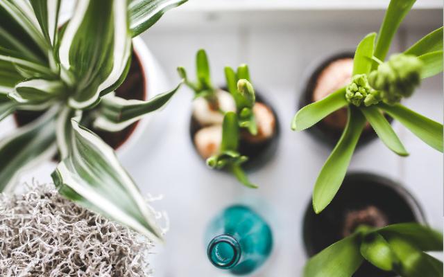 5 ideeën om de natuur in huis te halen