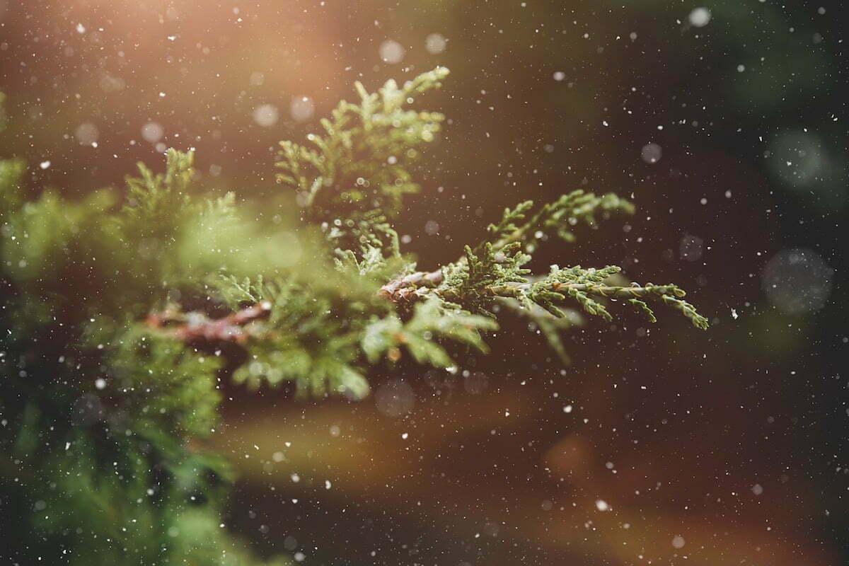 Plant jouw kerstboom in een echt kerstbomenbos!