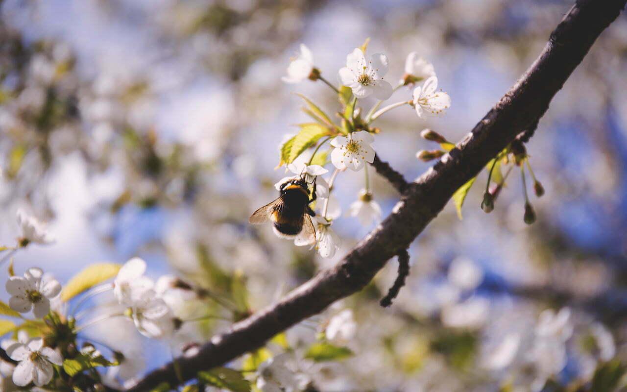 Het boomregister gaat bijen helpen