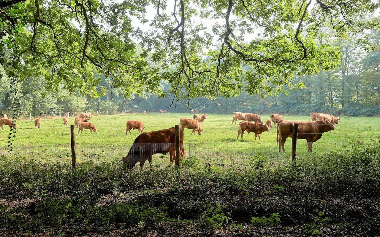 Herenboerderij Boxtel