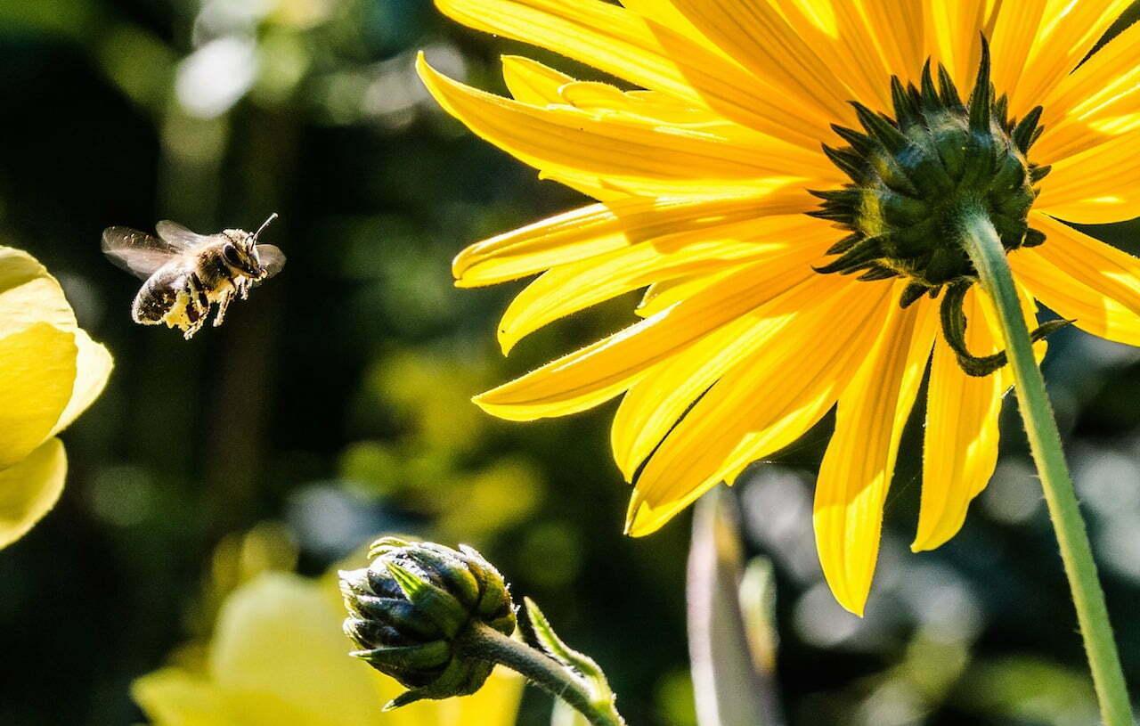 Deze initiatieven helpen de bijen een handje