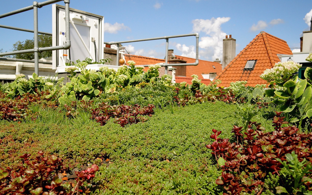 Zo creëerde Leora een prachtig groen dak
