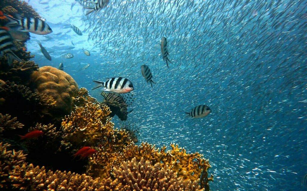 Great Barrier Reef 3D-printen koraal