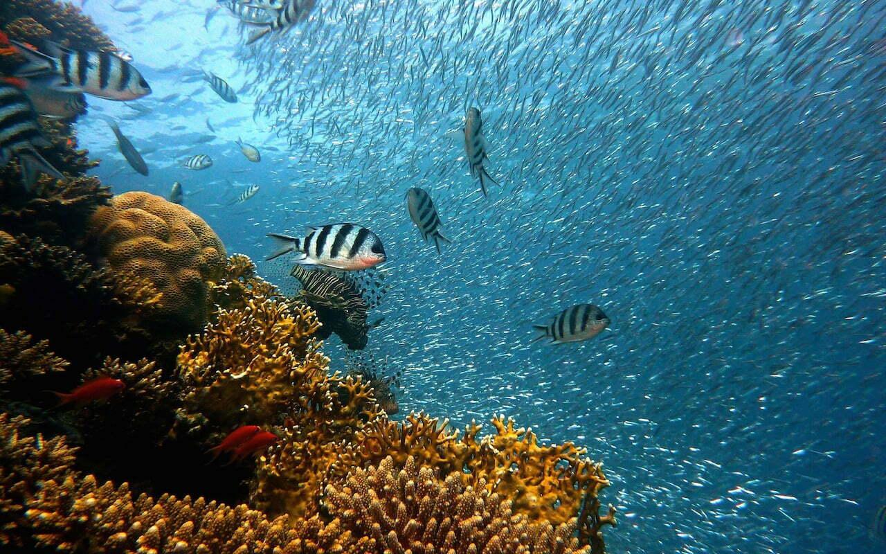 Wetenschappers printen koraal voor het Great Barrier Reef