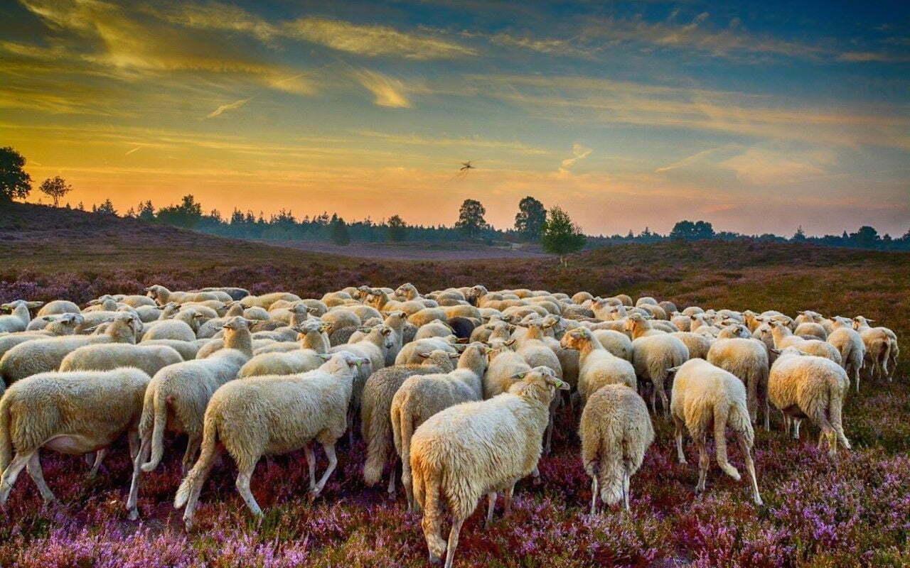 Over natuurbeschermers en groene initiatieven