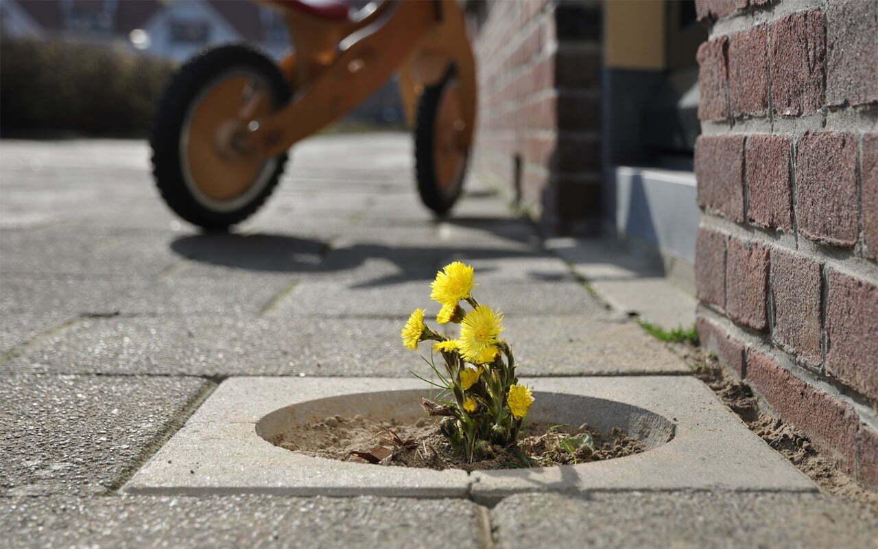 Living Pavement tegel - plantsoenrevolutie Gewildgroei