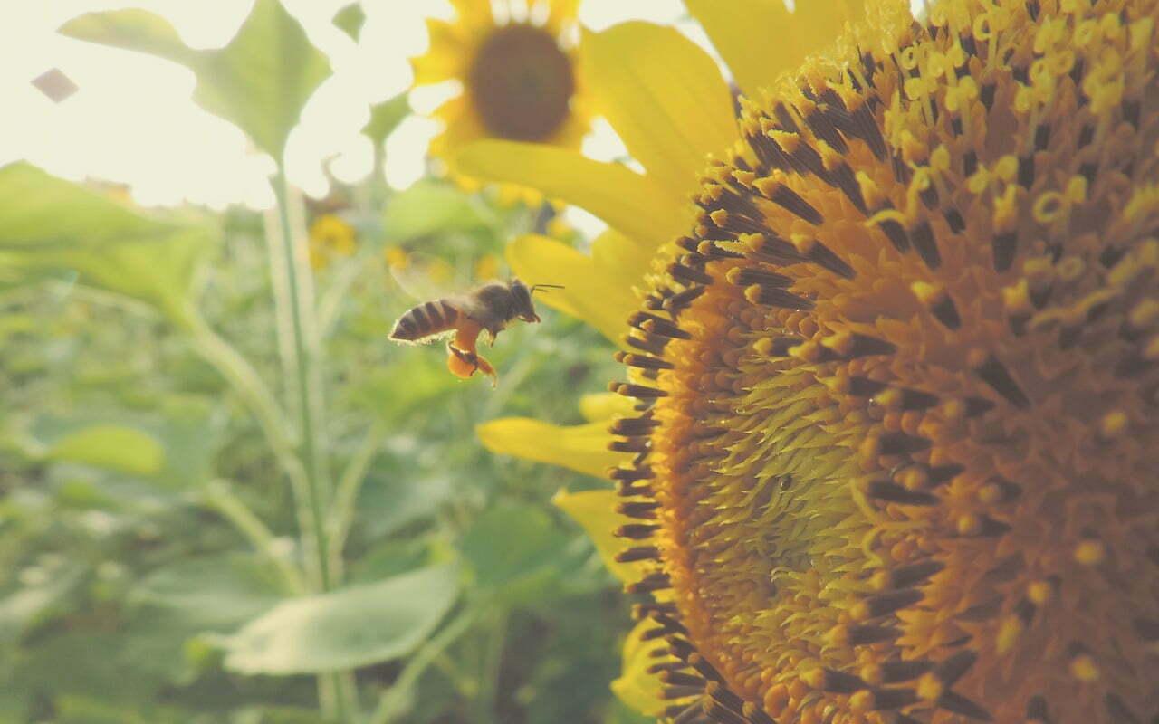 The Pollinators gaan de biodiversiteit in ons land verbeteren