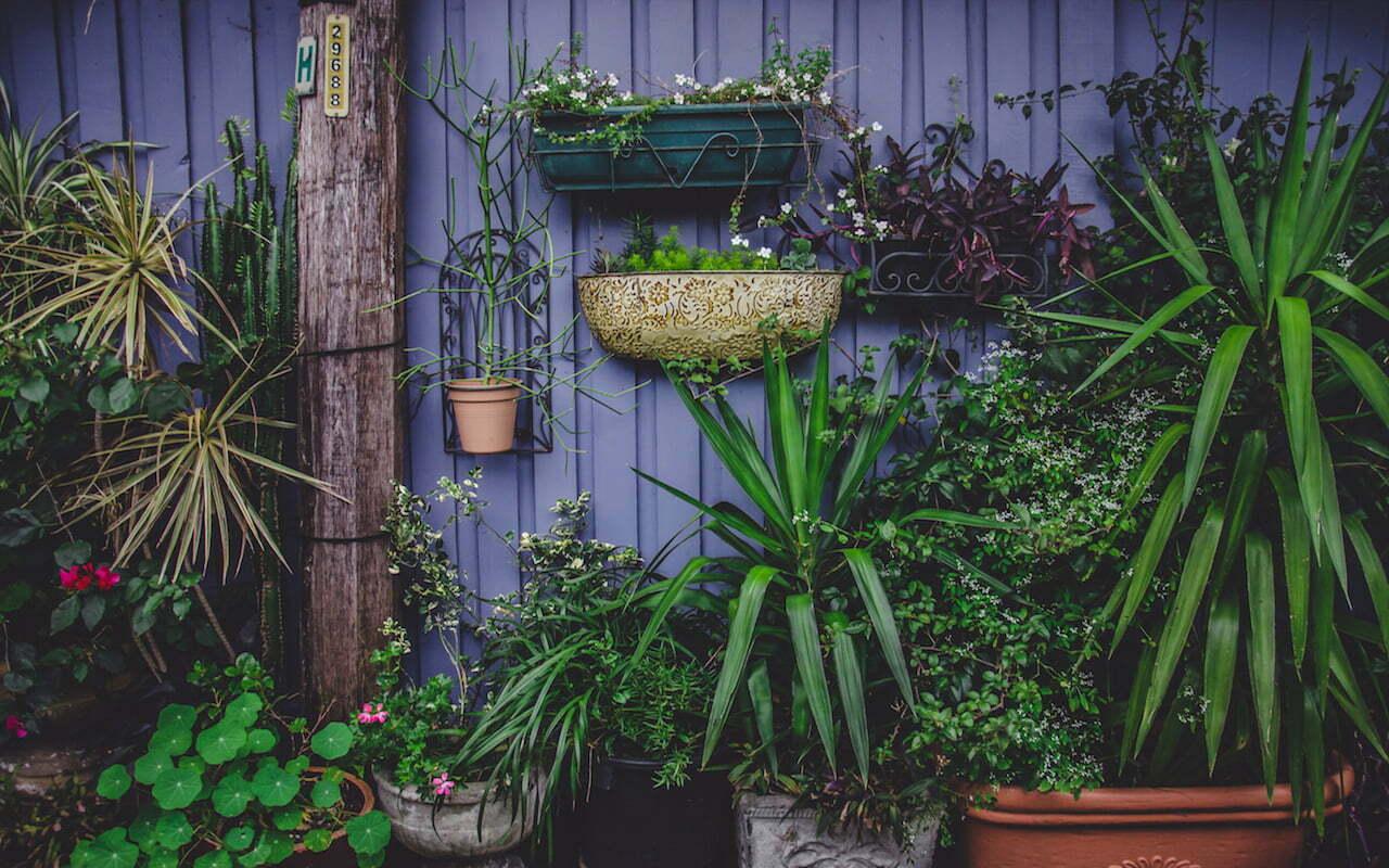 7 adresjes voor tweedehands planten