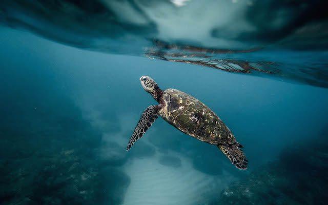 Onze oceanen beschermen