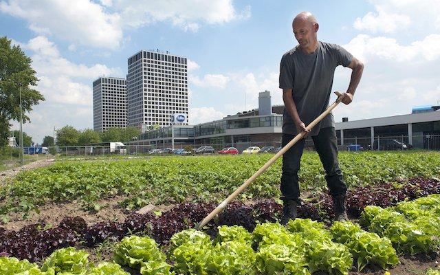 Stadslandbouwfoto Hans van Rhoon