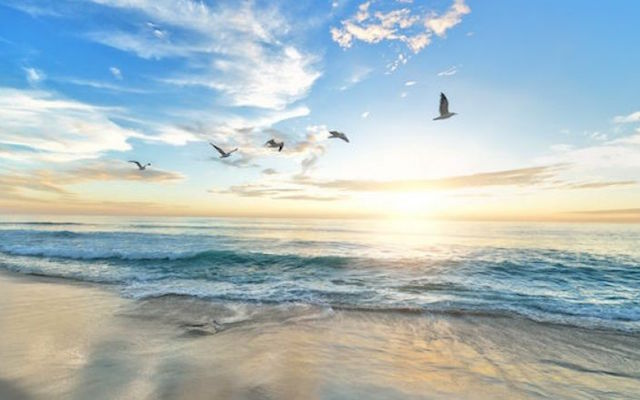 De Rijke Noordzee: van windmolenpark tot oesterrif