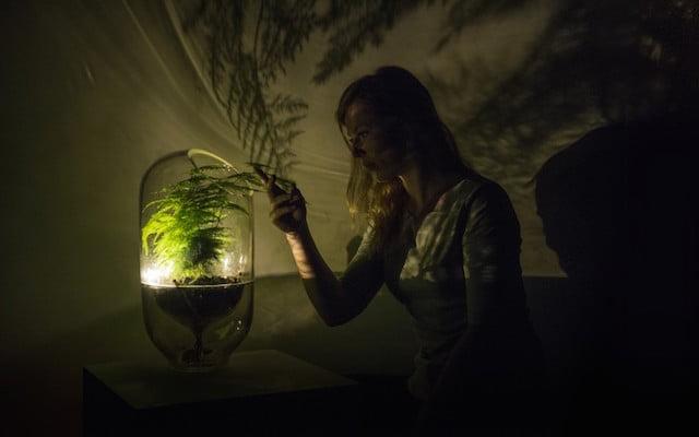 Deze lamp werkt op levende energie