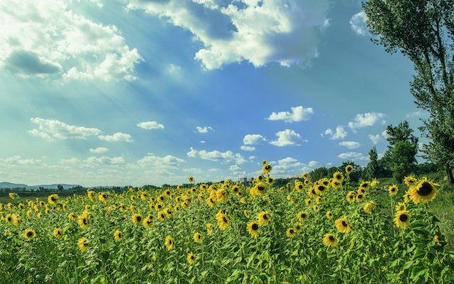 7 uitjes om het zomergevoel vast te houden