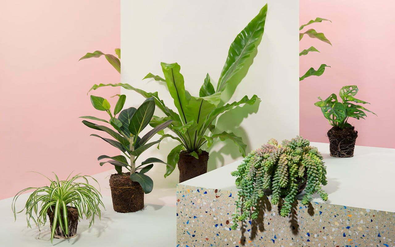 Zo houd je je planten in leven
