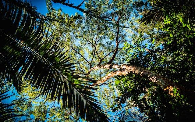 groene oase India man bomen plant