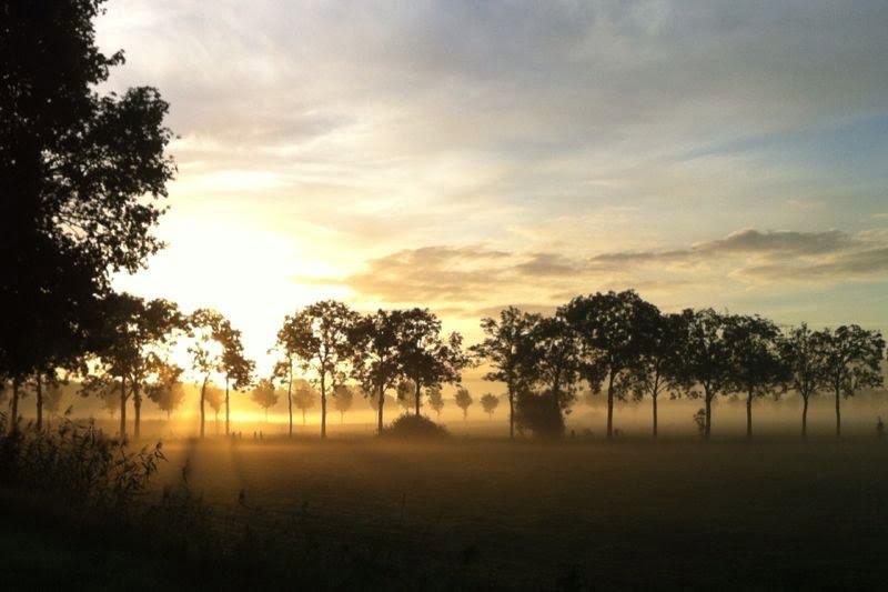 De zon komt op en bomen staan in de mist. Ook zij hebben bescherming nodig.