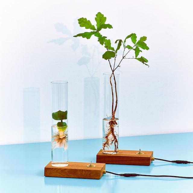 Dutch Design Week - Glowing Roots - Green Dexter