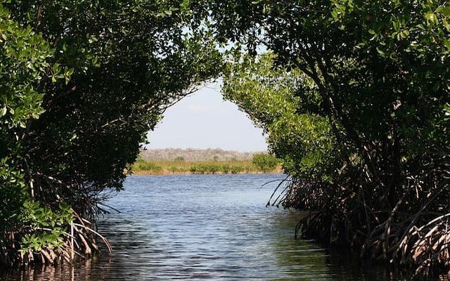 De magie van de mangrove