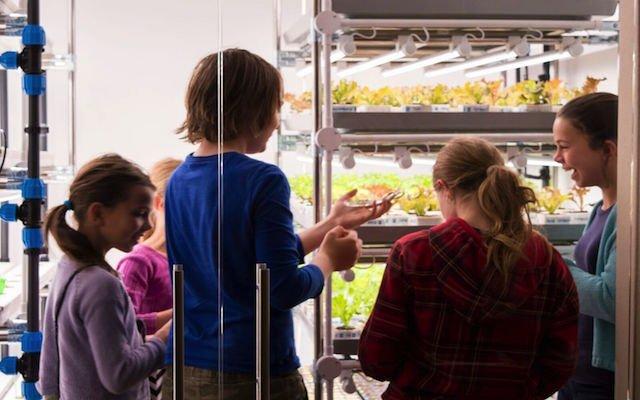 Zijn Vertical Farms de schooltuinen van de toekomst?