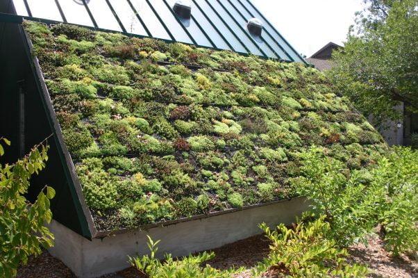 Dit groene dak is gemaakt van condooms en maandverband