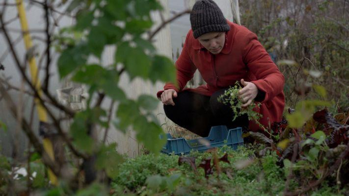Alles leren over zelfvoorzienend leven: Boerderijhoppen