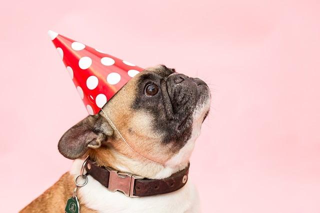 jaaroverzicht 2017 met hond met feestmuts