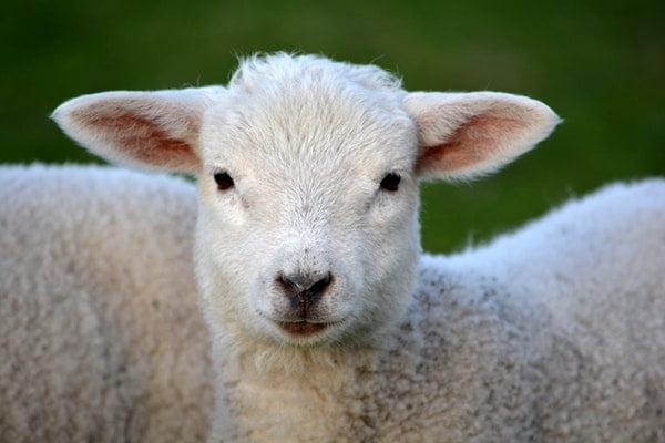 Duurzame wol
