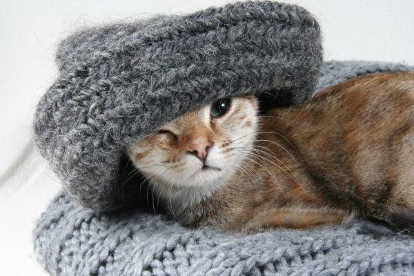 Duurzame opties voor je huisdier: biobrokjes en zelfgemaakte kattenbakvulling
