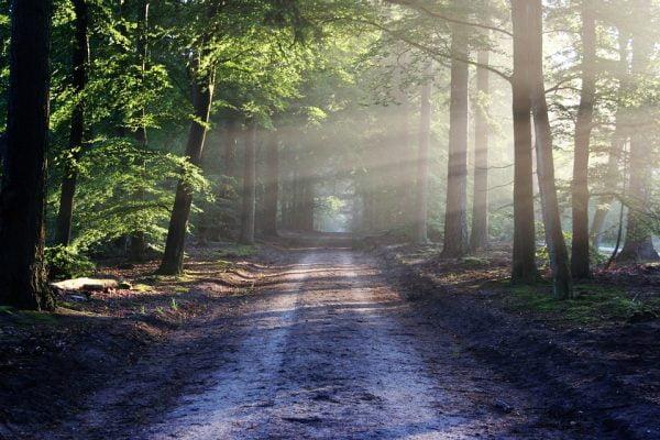 Vijf manieren om in Nederland tot rust te komen