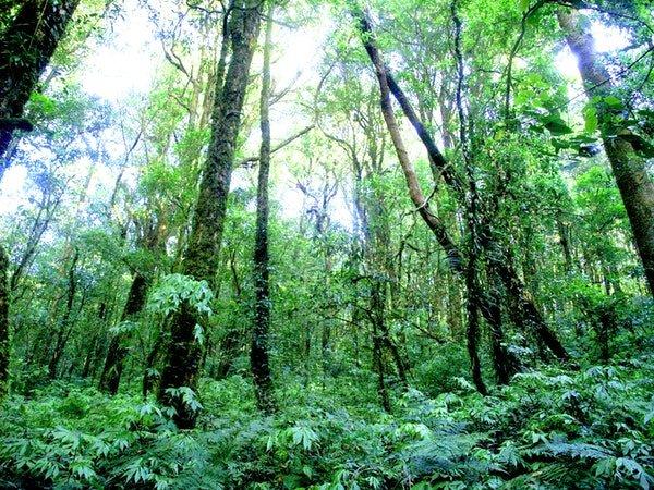 In Engeland komt een nieuw bos met 50 miljoen bomen