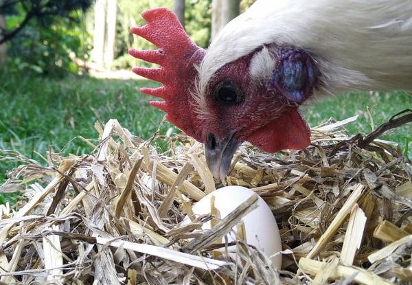 Duurzame daad 20/50: Welke eieren kies ik voor mijn geld?