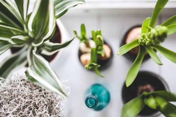 De fijnste luchtzuiverende planten op een rij