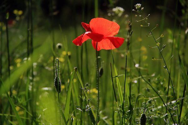 Tips voor een onderhoudsarme groene tuin