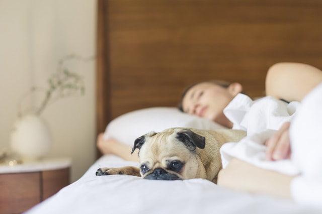 Schone slapers opgelet! Omring je in bed met natuurlijke materialen