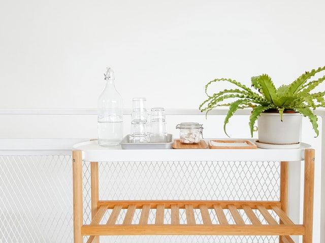 Planten kopen? Hier vind je duurzame en gifvrije exemplaren