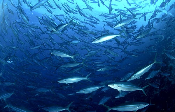 Duurzame daad 25/50 – De vis wordt duur betaald
