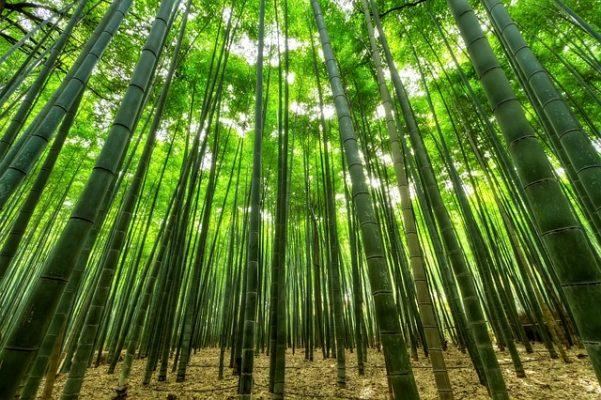 Dit zijn de voordelen van bamboe