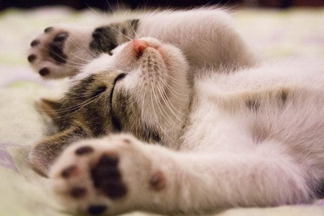 Zo gezond en gelukkig maakt een huisdier je. Ook als je 'm leent.