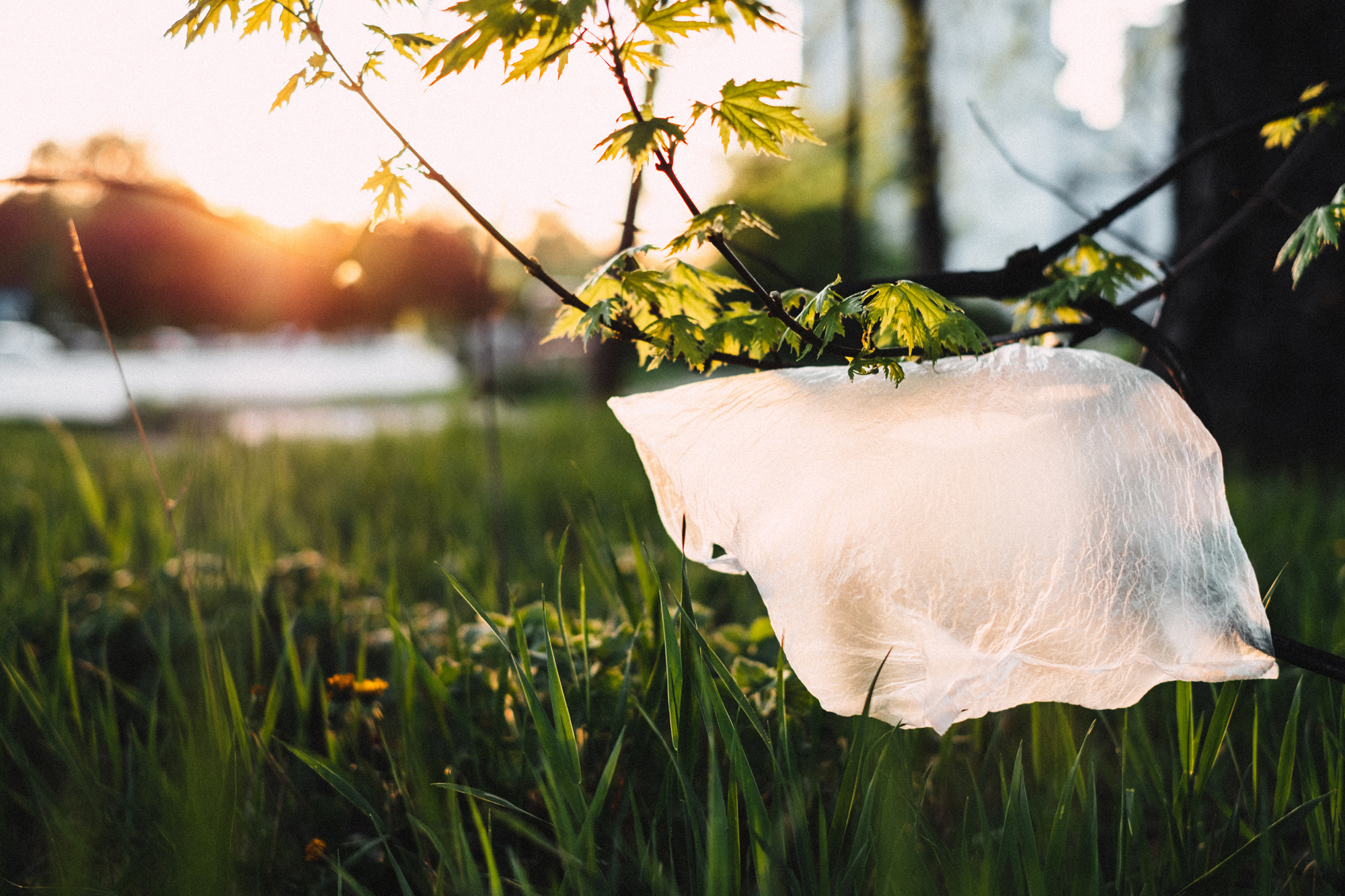 In Den Haag willen D66 en Groen Links een totaalverbod op plastic tasjes