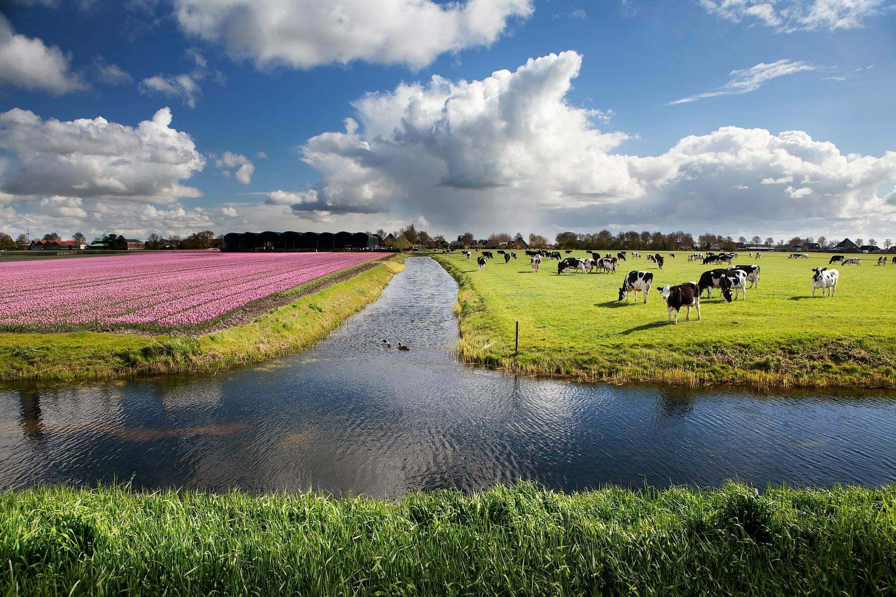 Duurzame zuivel van koeien in de wei