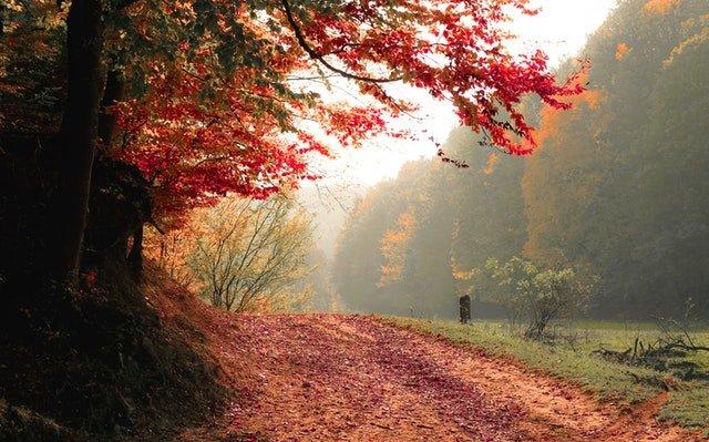 Hier maak je de mooiste herfstwandelingen