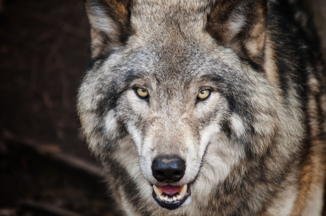 Positief dierennieuws: deze 7 diersoorten zijn gered van uitsterven