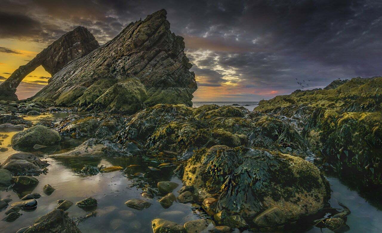 zeewier op de rotsen