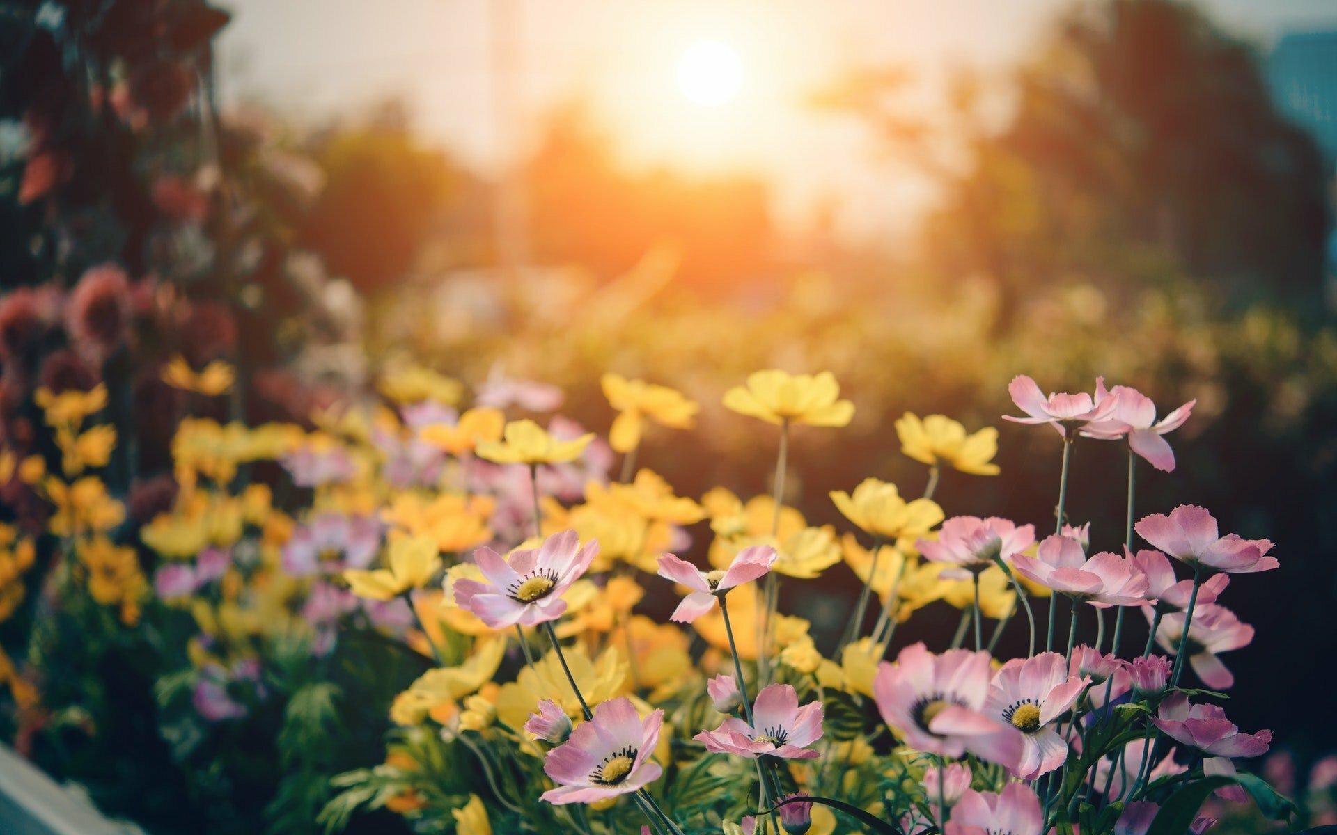 vergroenen van je tuin