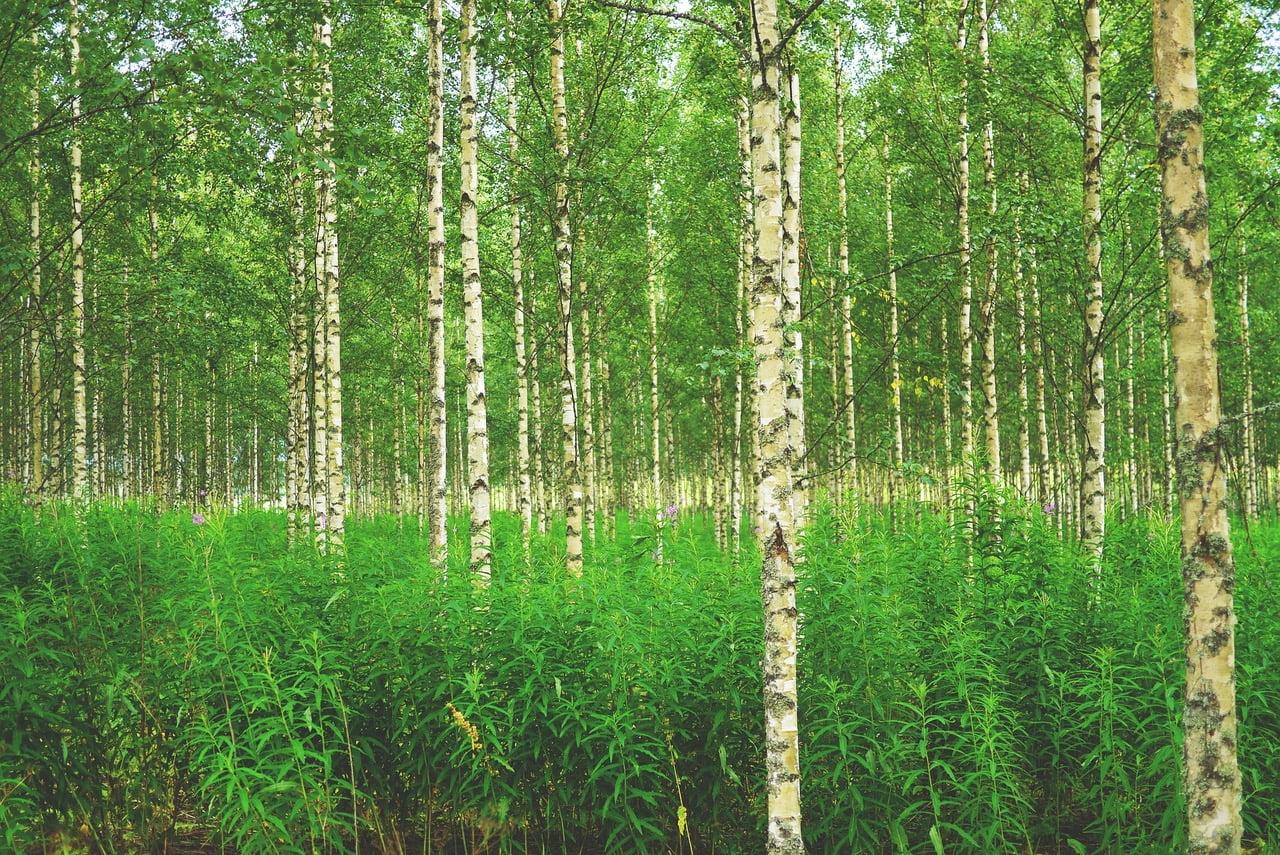 foto van groen