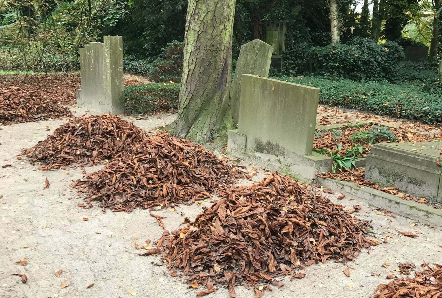 Mogen we straks in Nederland ons lichaam composteren na de dood?